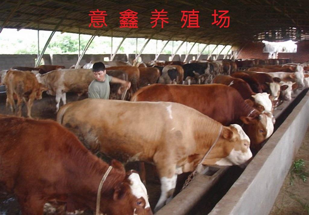 牛羊养殖技术